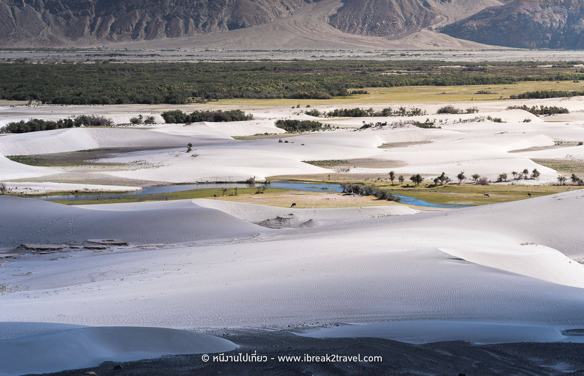 Sand dune of Nubra Valley